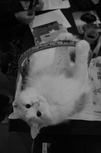 yoshi-basket